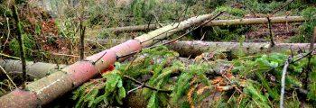 Orkan Friederike wütet über Deutschland